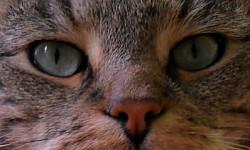 Profilový obrázek Menumode