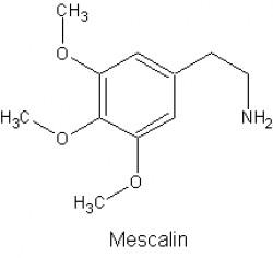 Profilový obrázek Meschallin