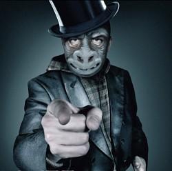 Profilový obrázek Monkey Orchestra