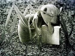 Profilový obrázek Music Ants