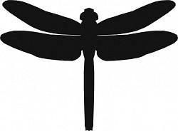 Profilový obrázek Neoptera