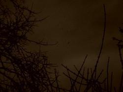 Profilový obrázek Nimbus Lacrimae