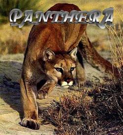 Profilový obrázek Panthera