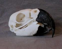 Profilový obrázek Papouškovo sirotci