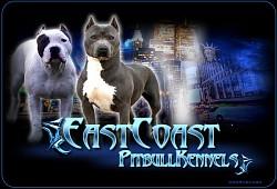 Profilový obrázek pitbullters