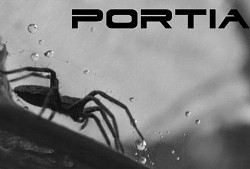 Profilový obrázek Portia