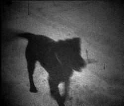 Profilový obrázek psisko