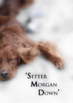 Profilový obrázek Setter Morgan Down