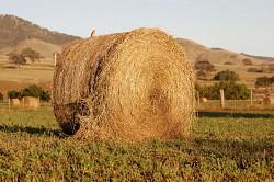 Profilový obrázek The Bales