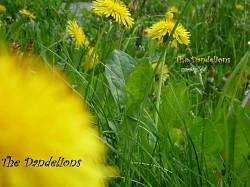 Profilový obrázek The Dandelions