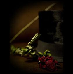 Profilový obrázek The Folden Rose