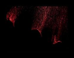Profilový obrázek výkřiky do tmy