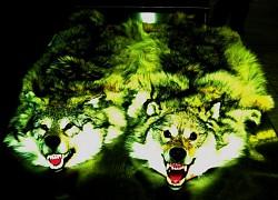 Profilový obrázek wolfszone