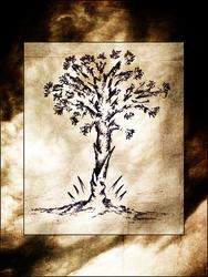 Profilový obrázek Roots of Mallorn