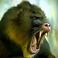 Profilový obrázek MonkeyMo