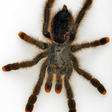Profilový obrázek tarantulejitka