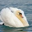 Profilový obrázek swan33