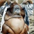 Profilový obrázek 3prsta opica