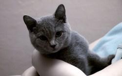 Profilový obrázek Mlsalka