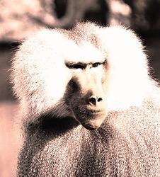Profilový obrázek Páví Ján