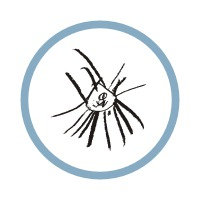 Profilový obrázek ov-kluby.net (ovéčka)