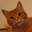Profilový obrázek goretti