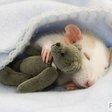 Profilový obrázek potkanka1998