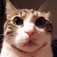 Profilový obrázek Mutant Cat