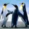 Profilový obrázek Jsem_tučňák