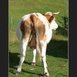Profilový obrázek Urbis