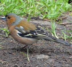 Profilový obrázek Free as a bird