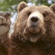 Profilový obrázek Medvěd