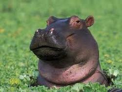 Profilový obrázek Psig