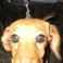 Profilový obrázek Baaftp