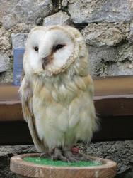 Profilový obrázek Lebowská