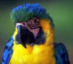 Profilový obrázek katka polly