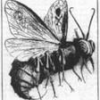 Profilový obrázek belzebubcz