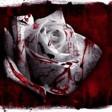 Profilový obrázek Blood-Flower