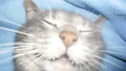 Profilový obrázek Xouki
