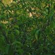 Profilový obrázek tea-tree
