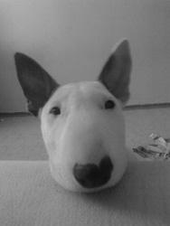 Profilový obrázek dodek