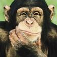 Profilový obrázek Libor opičák