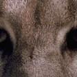 Profilový obrázek lupus