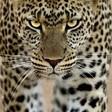 Profilový obrázek Marcelas