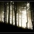 Profilový obrázek objímač stromů