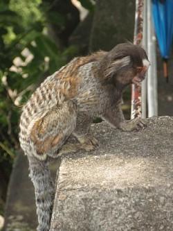 Profilový obrázek Opička andy