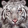 Profilový obrázek Rianka