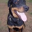 Profilový obrázek sir Roxy Von Balboa