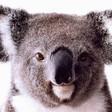 Profilový obrázek Tedy
