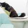 Profilový obrázek Katze in der Toilette 2018